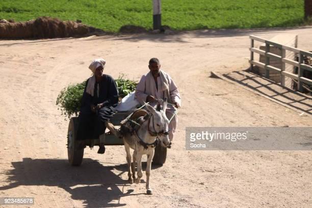 donkey cart - ox cart stock-fotos und bilder
