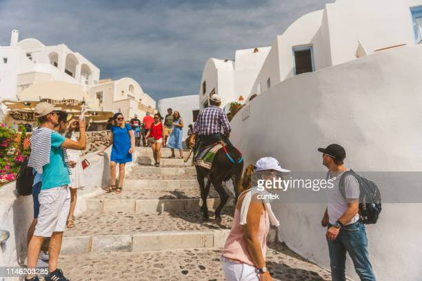 donkey climbing in oia, santorini - restraint muzzle stock photos and pictures