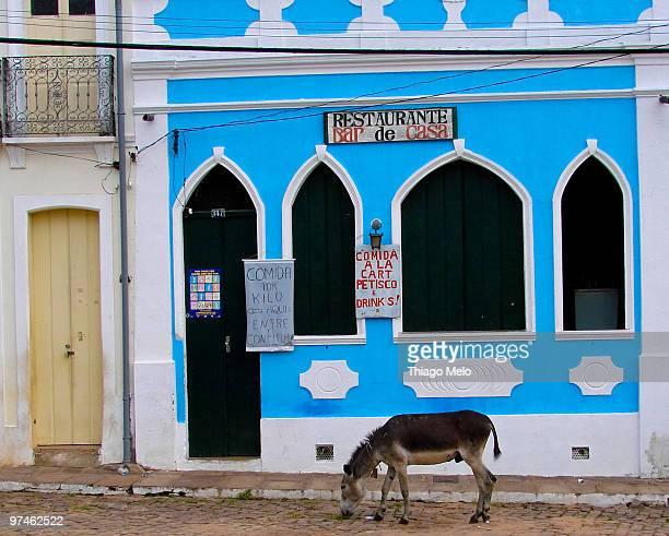 donkey eating grass in front of a restaurant - parco nazionale di chapada diamantina foto e immagini stock
