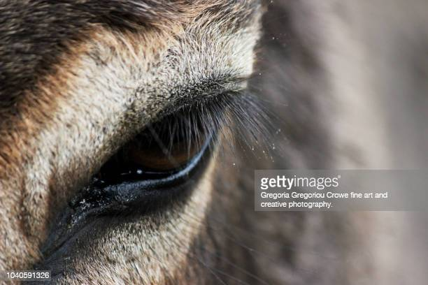 donkey eye - gregoria gregoriou crowe fine art and creative photography. stock pictures, royalty-free photos & images
