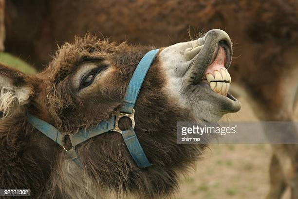 donkey grin - jackass images stock pictures, royalty-free photos & images