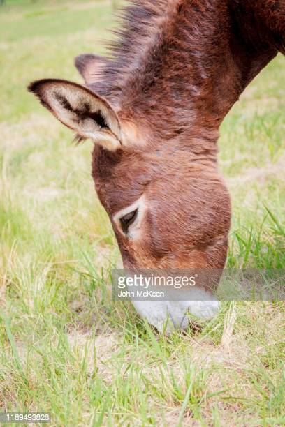 donkey head - hairy bum stock pictures, royalty-free photos & images
