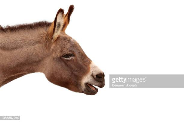 Donkey Hee Haw