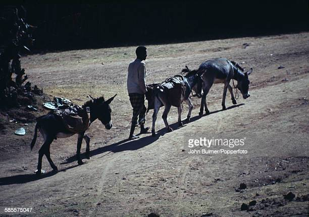 A donkey herder in the Central Highlands of Ethiopia circa 1965