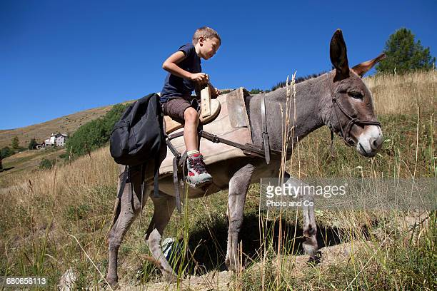 Donkey hiking, Child
