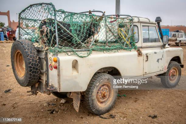 donkey in bed of truck - television show stock pictures, royalty-free photos & images