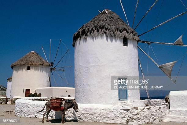 A donkey in front of Kato Mili windmills Mykonos Island Cyclades Islands Greece