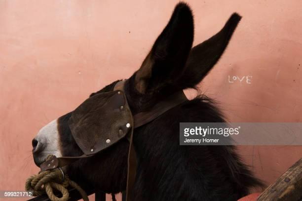 Donkey in Marrakech