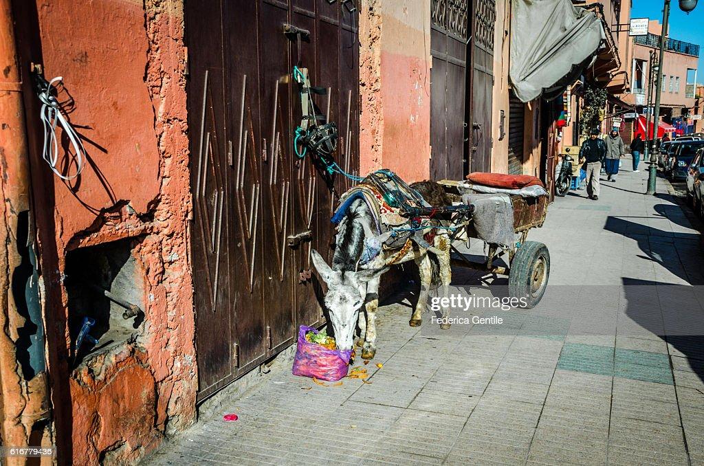 Donkey in Marrakesh : Stock Photo