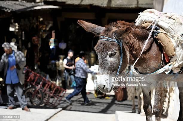 Donkey in Old Medina -Fez