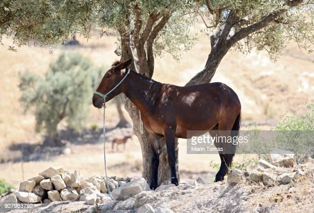 donkey in the shade - mula imagens e fotografias de stock