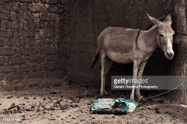 donkey life - famine stock pictures, royalty-free photos & images