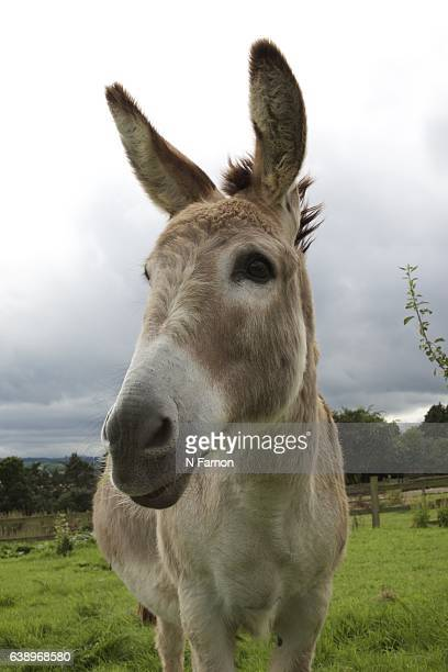 Donkey looking up