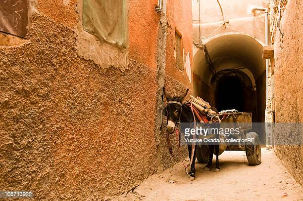 donkey, morocco - animal powered vehicle stock photos and pictures