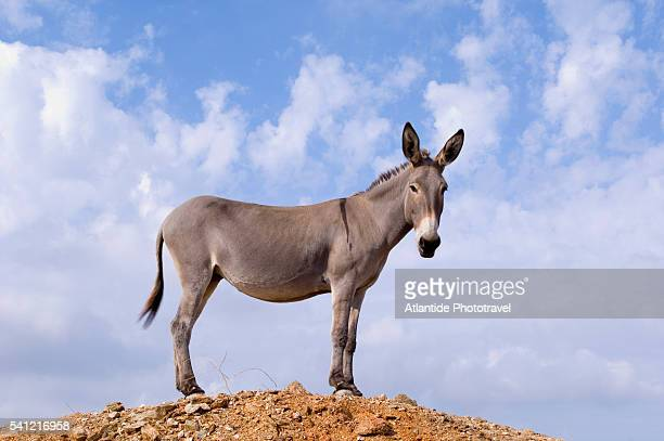 donkey near kato meria - donkey stock pictures, royalty-free photos & images