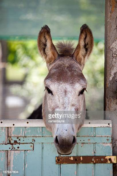 Donkey on a farm in Udine, Italy
