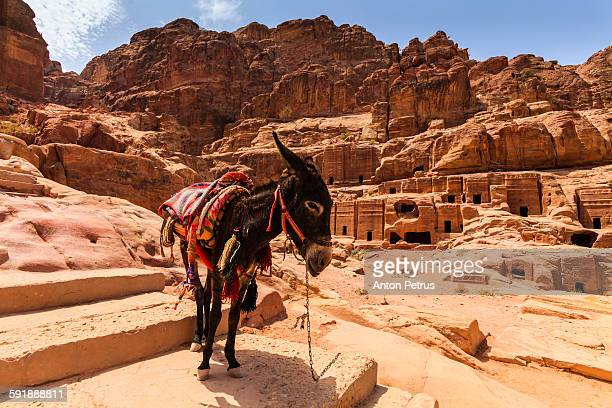 donkey on the background of an ancient temple. - anton petrus stock pictures, royalty-free photos & images