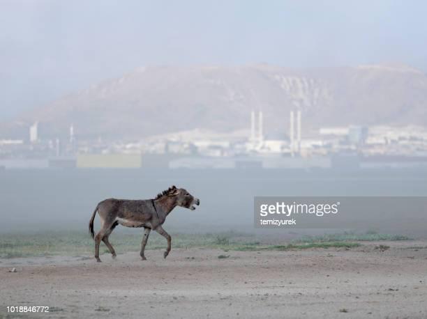 burro - animais machos - fotografias e filmes do acervo