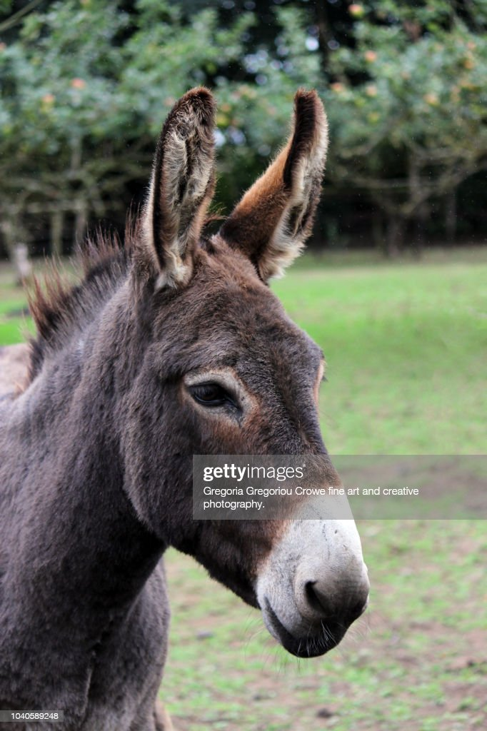 Donkey : Stock Photo
