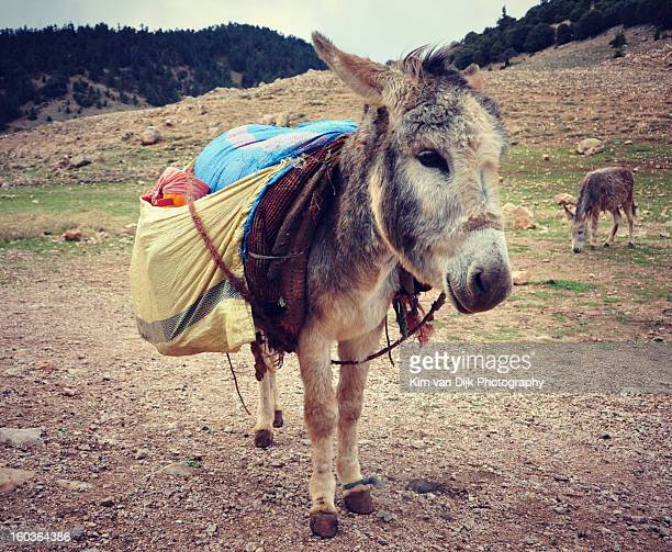 donkey - donkey stock pictures, royalty-free photos & images