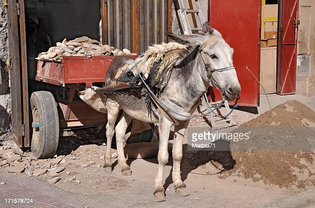 burro - ox cart fotografías e imágenes de stock