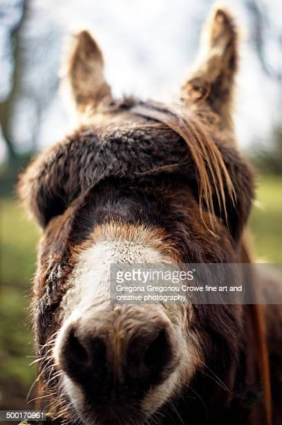 donkey - gregoria gregoriou crowe fine art and creative photography ストックフォトと画像