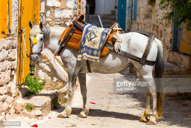 donkey (Hydra, Greece)