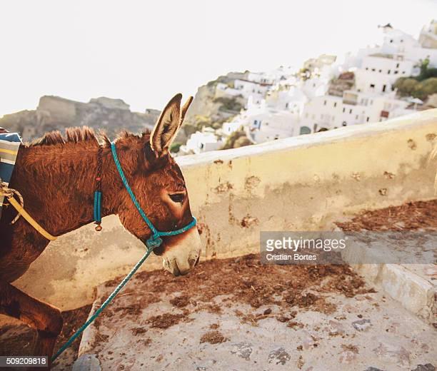 donkey portrait - bortes stock photos and pictures