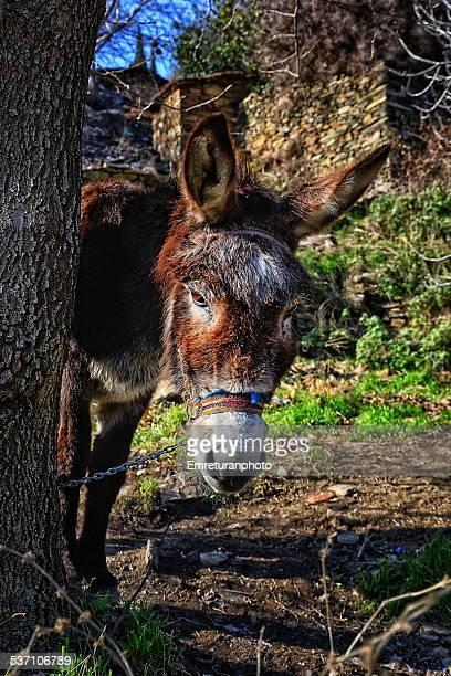 donkey portrait - emreturanphoto ストックフォトと画像