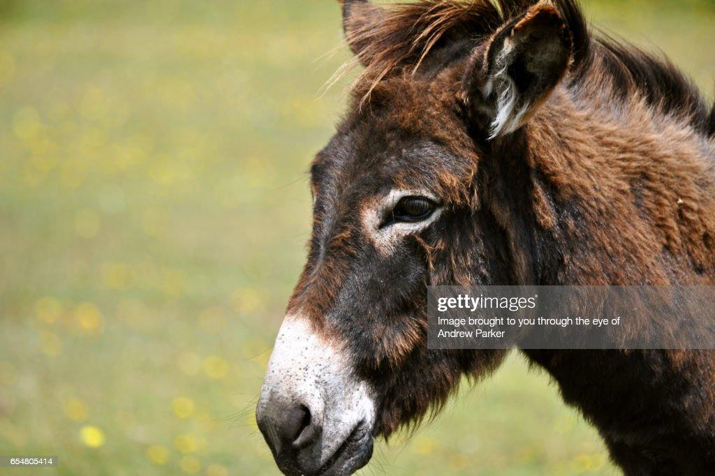 Donkey Power : Stock Photo