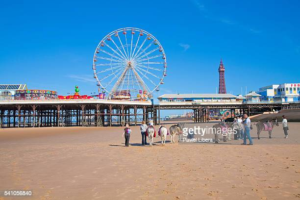 donkey rides on blackpool beach at low tide - blackpool beach stock pictures, royalty-free photos & images