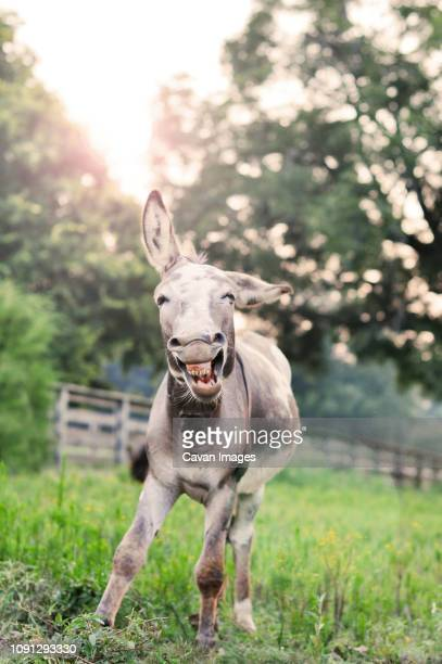 donkey running on grassy field against trees at farm - donkey stock pictures, royalty-free photos & images