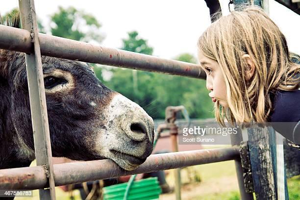 donkey see...donkey do... - esel stock-fotos und bilder