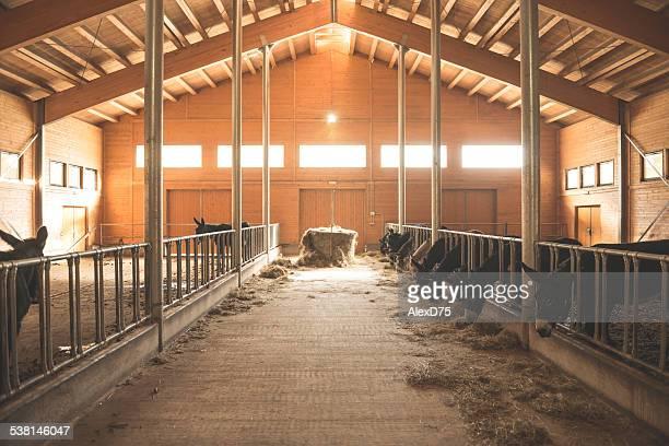 Donkey stable
