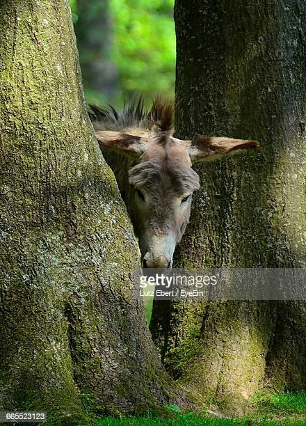 Donkey Standing Amidst Trees At Forest