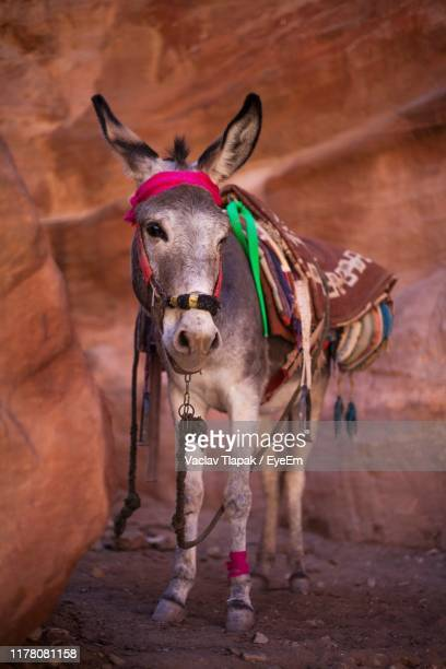 donkey standing by rock formation - working animal stock pictures, royalty-free photos & images