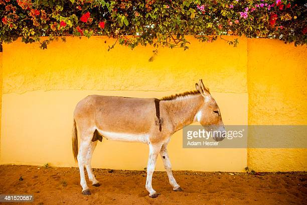 A donkey standing in front of a colorful wall.