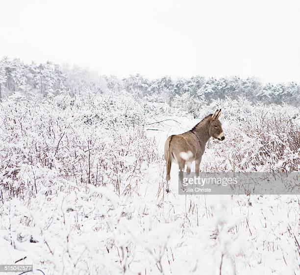 Donkey standing in snowy field