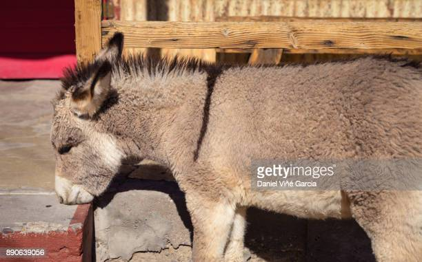 A Donkey Standing In The Street