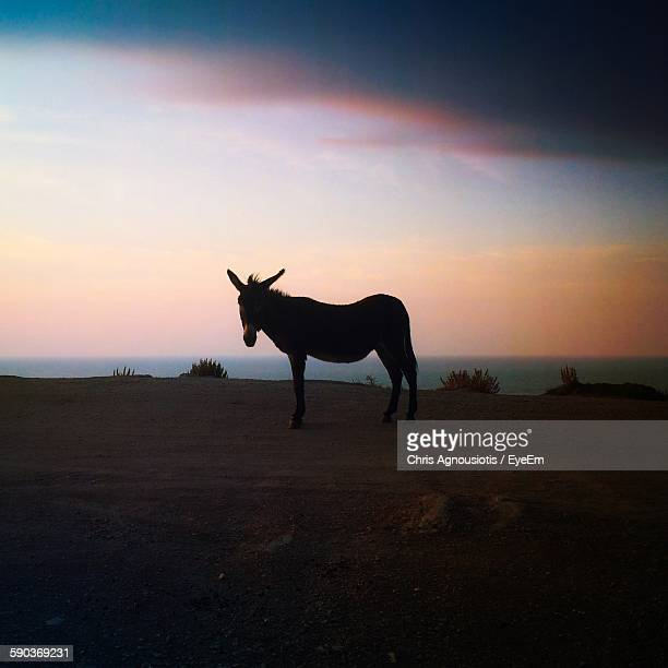 Donkey Standing On Landscape Against Sky During Sunset