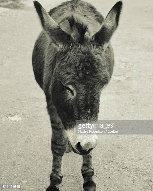donkey standing on street - gillingham stock pictures, royalty-free photos & images