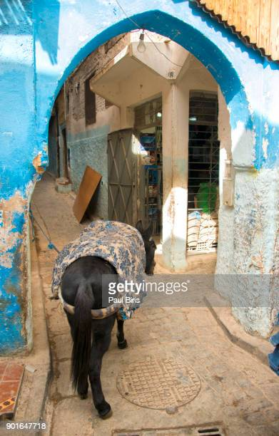 Donkey stands in an alley, Medina of Fez, Morocco