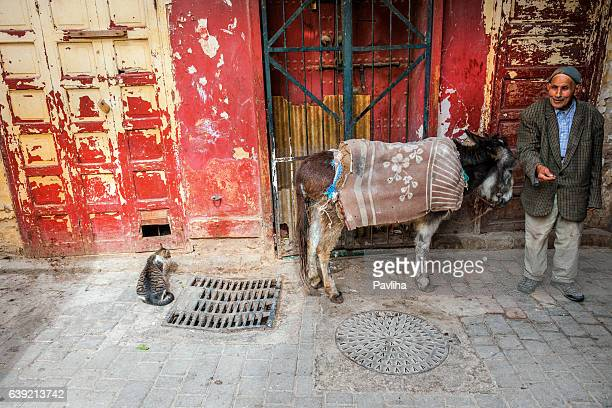 Donkey waiting in Fez Medina,street,Morocco,North Africa