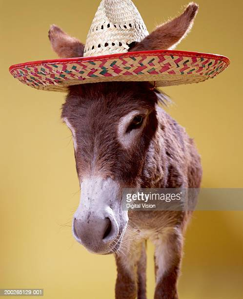 donkey (equus hemonius) wearing straw hat - mexican hat stock pictures, royalty-free photos & images