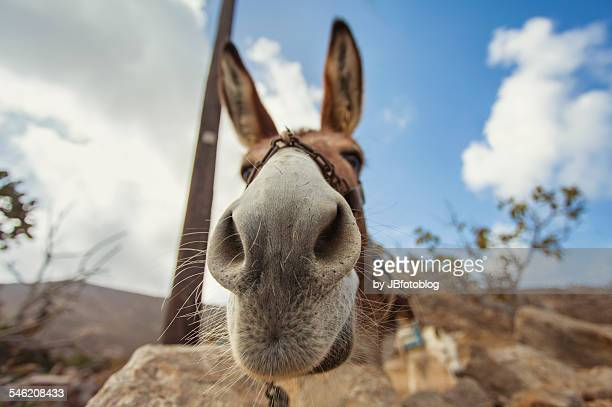 donkey wide angle - jackass images stock pictures, royalty-free photos & images