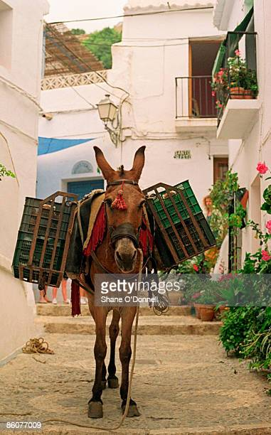 Donkey with crates