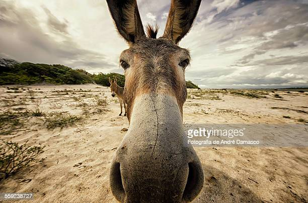 Donkey with Wide Angle