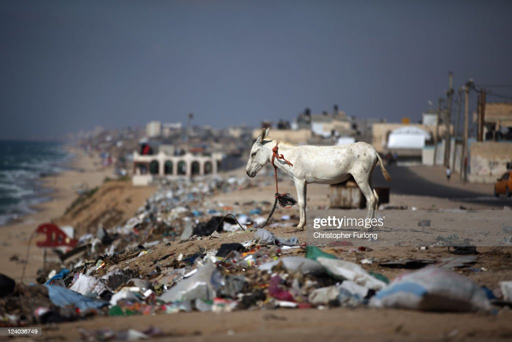 Donkeys are tethered amongst rubbish alongside Beach Road on August 17, 2011 in Gaza City, Gaza. Palestinian President Mahmoud Abbas will formally submit the application for Palestinian statehood to the 66th United Nations General Assembly in New York on September 20th. The Palestinians and the Israelis are taking part in global diplomatic lobbying to win support for their differing positions on statehood. The Palestinian bid arises from two decades of on-and-off peace talks that have failed to produce a deal. The ultimate goal of the Palestinian Authority is to end Israeli occupation and to establish a sovereign and independent state on the 1967 borders with Jerusalem as its capital.