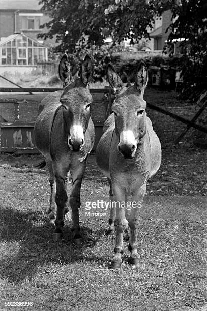 Donkeys. August 1977 77-04351-004