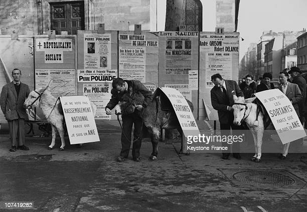Donkeys Carrying Electoral Posters In Paris On December 1955
